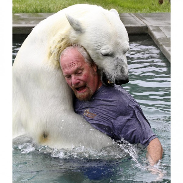 polar-bear-fight_1935305i