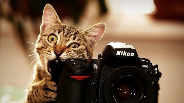 fotograf-oboi