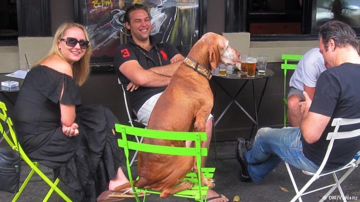 Собаки в Германии.jpg