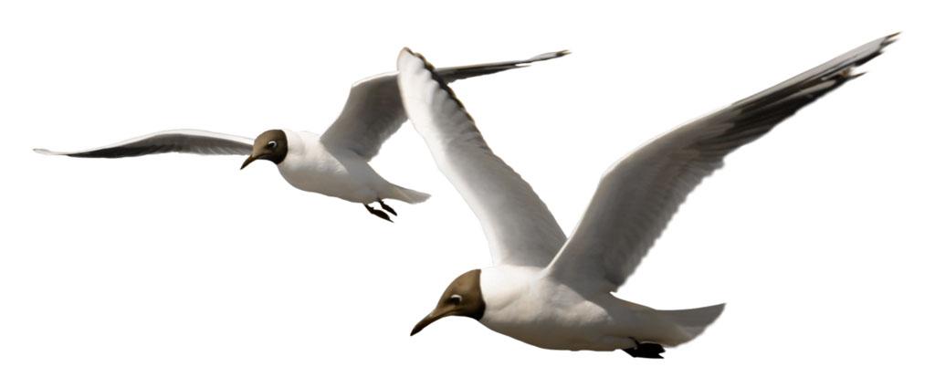 Чайки.jpg