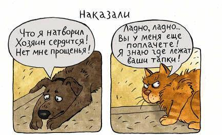 кот и собака.jpg1
