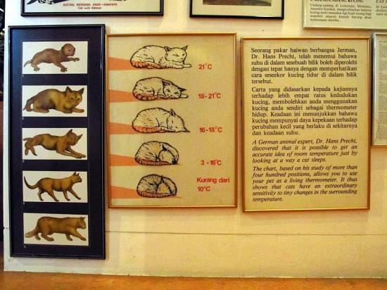 kuching_cat_museum_30