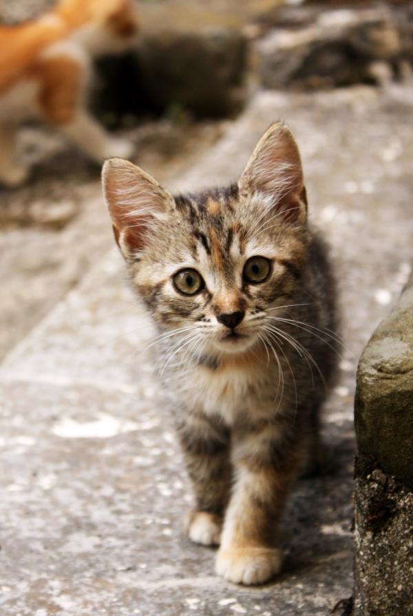 Живые картинки коты, вконтакт