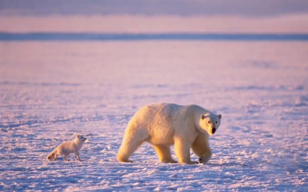Россиянам дадут по бесплатному гектару в Арктике!!!