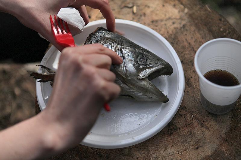 41-fishhead