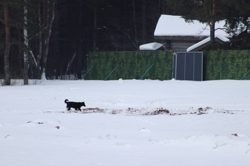 «Чёрный таможенник» возле туристической базы, где живёт