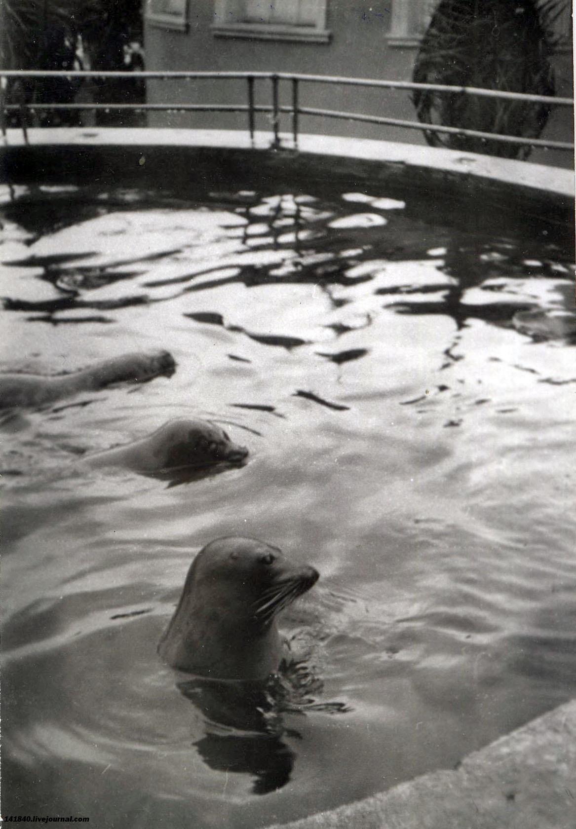 Батуми  Первый дельфинарий.jpg