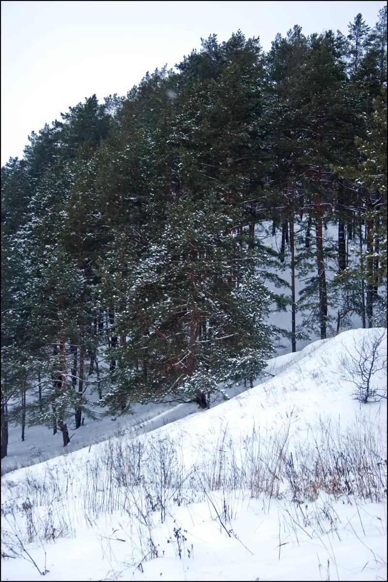 В лесу 07