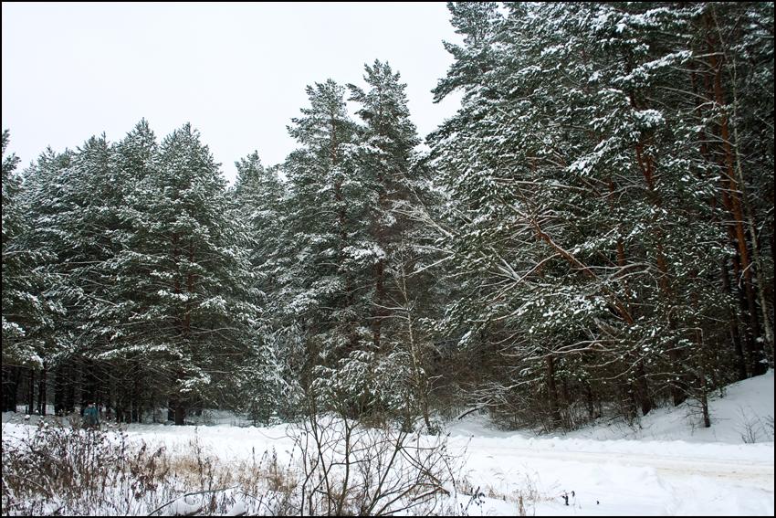 В лесу 02