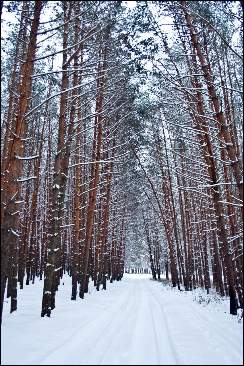 В лесу 04