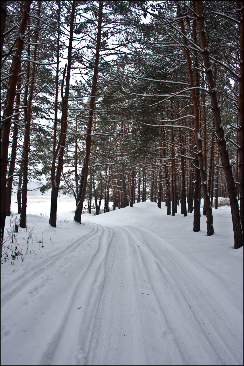 В лесу 01