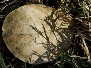 grass shadow on fallen leaf