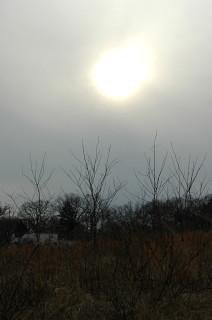 watery winter sun