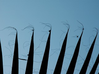 frond shadows