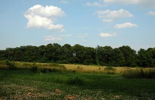 upper field