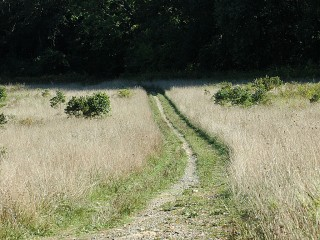 perimeter path