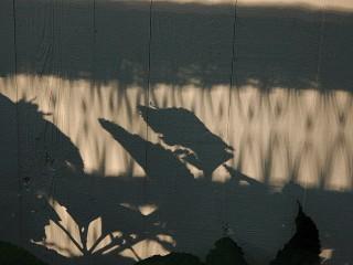 shadow of wicker and hydrangea