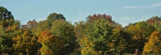 lower field treeline