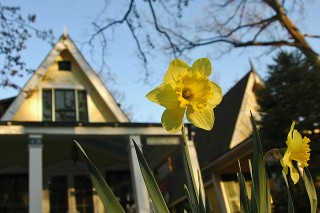 daffodils in context