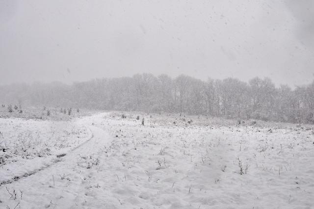 treeline recedes into snow