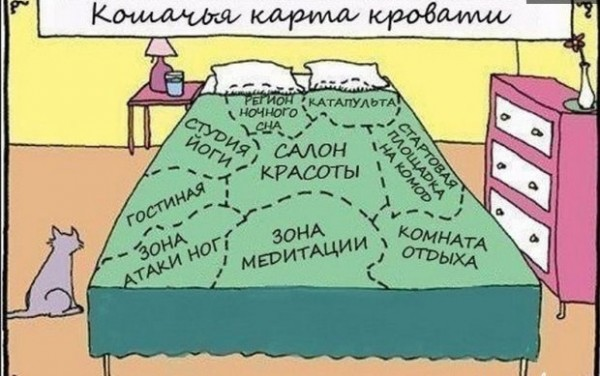 кошачья карта.