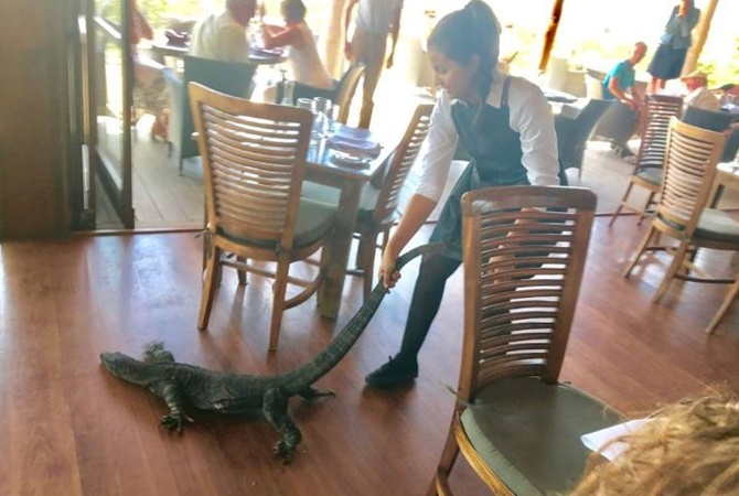 Смелая официантка спасла посетителей ресторана от варана