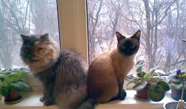 мои кошки.