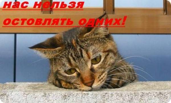 кот. jpg