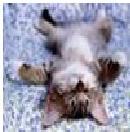 котик лежит