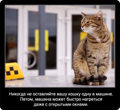 60-интересные факты о кошках в картинках