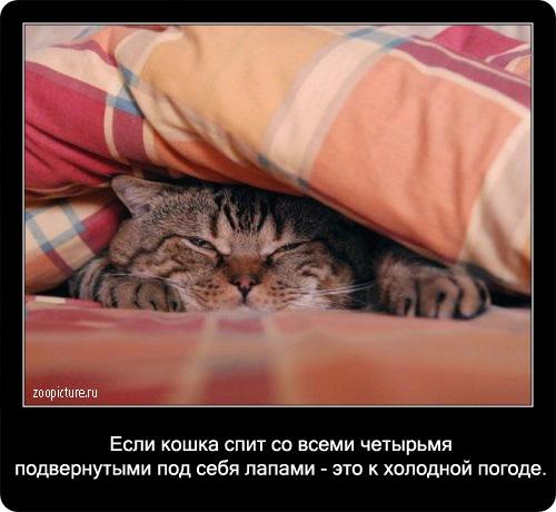 61-интересные факты о кошках в картинках