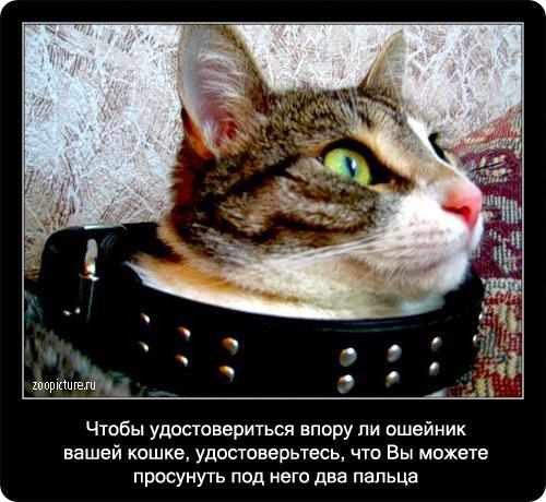 62-интересные факты о кошках в картинках