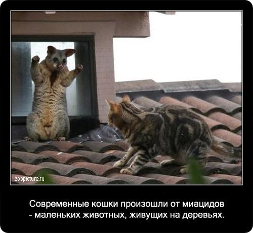 63-интересные факты о кошках в картинках