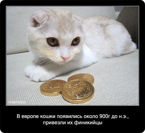 65-интересные факты о кошках в картинках