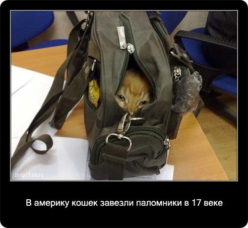 66-интересные факты о кошках в картинках