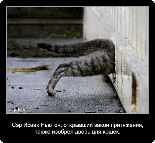 68-интересные факты о кошках в картинках