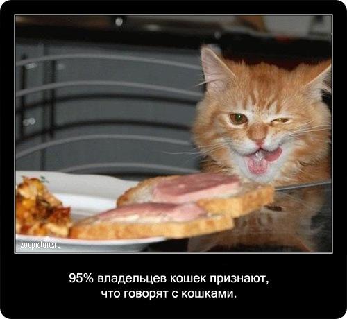 69-интересные факты о кошках в картинках