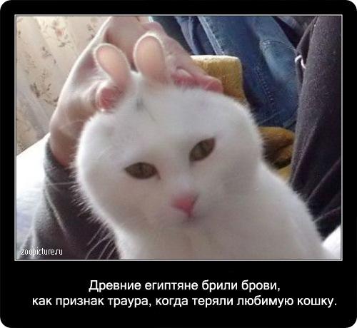 70-интересные факты о кошках в картинках