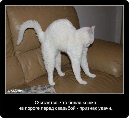 72-интересные факты о кошках в картинках