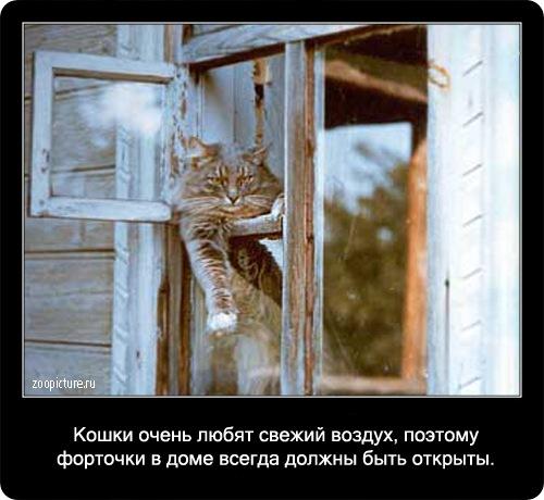 73-интересные факты о кошках в картинках