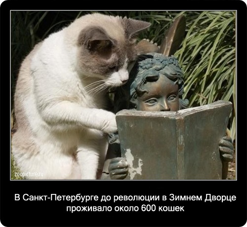 75-интересные факты о кошках в картинках