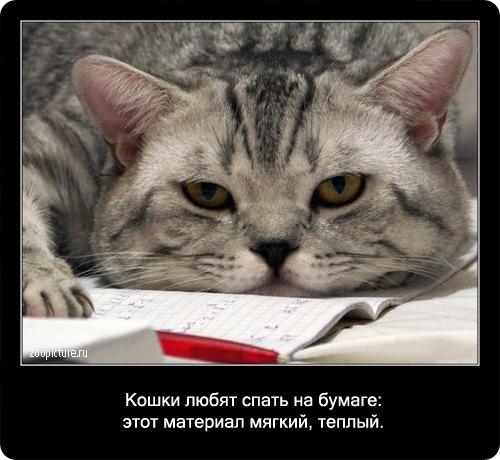 76-интересные факты о кошках в картинках