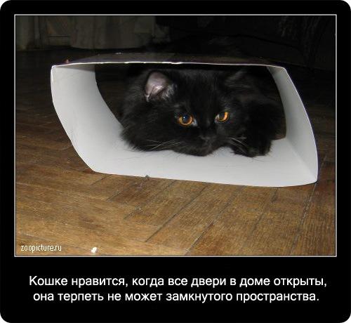 77-интересные факты о кошках в картинках