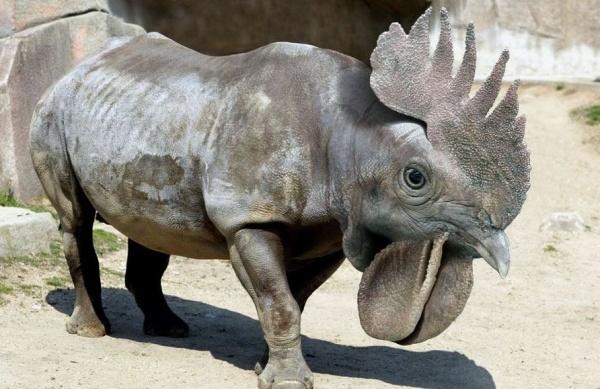 фантастические и интересные фотошопные животные голландского ретушера Яна Олихока (Jan Oliehoek)