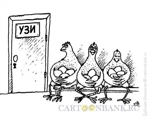 почему курицы глотают камушки
