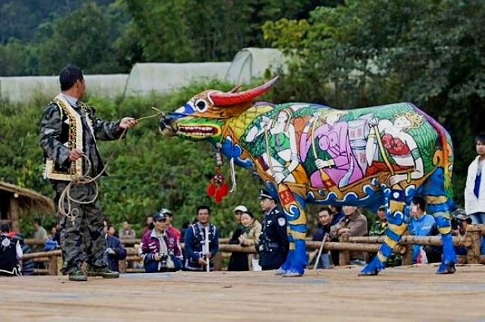 Bull Painting Festival, ежегодный традиционный фестиваль боди-арта на быках_1