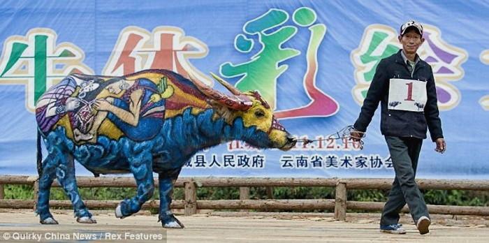 Bull Painting Festival, ежегодный традиционный фестиваль боди-арта на быках_2