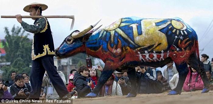 Bull Painting Festival, ежегодный традиционный фестиваль боди-арта на быках_4