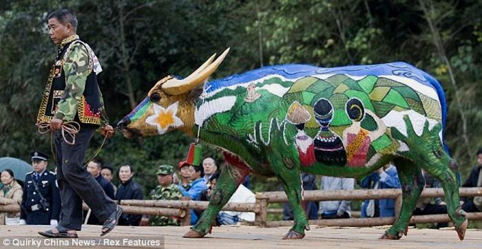 Bull Painting Festival, ежегодный традиционный фестиваль боди-арта на быках_6