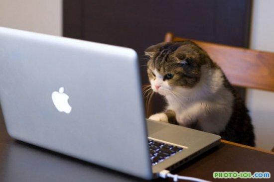котёнок за компьютером